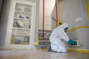 Mold Inspection and Remediation in Bradenton